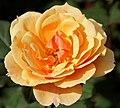 New York Botanical Garden (8076051223).jpg