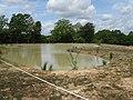 New pond near North America Farm - geograph.org.uk - 1314535.jpg