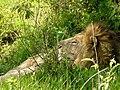 Ngorongoro Crater (52) (13962044600).jpg