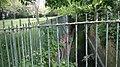 Norbury Brook 1.jpg