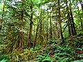 North Cascades National Park (9290004725).jpg