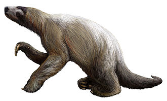Sloth - Restoration of the Shasta ground sloth (Nothrotheriops shastense)