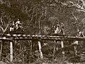 Nouvelle Calédonie - Chemin de fer d'exploitation forestière au Prony. Longueur 6 km.jpg