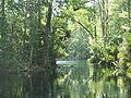 Ocala Silver River05.jpg