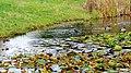 Ogród Botaniczny w Myślęcinku, Bydgoszcz, Polska - panoramio (222).jpg