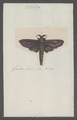 Oiketicus - Print - Iconographia Zoologica - Special Collections University of Amsterdam - UBAINV0274 056 02 0005.tif