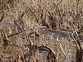 Old Mill Swamp (12459140605).jpg