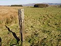 Old fence post - geograph.org.uk - 686337.jpg