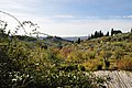 Olive Grove in Arcetri, Suburb of Firenze フィレンツェ郊外のオリーブ畑 - panoramio.jpg
