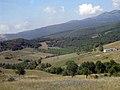 Olive groves, Bursa countryside - بساتين زيتون، ريف بورصة.jpg