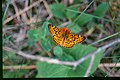 Orange Butterfly (5062835492).jpg