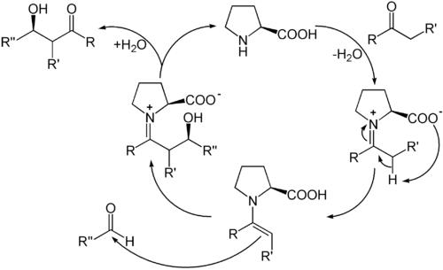 Katalysezyklus der organokatalytischen Aldolreaktion mit (S)-Prolin