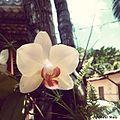 Orquidea Branca.jpg