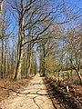 Oudeweg, Hoenderloo. Gelderland, Netherlands. - panoramio.jpg