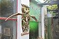 Owl House, Nieu-Bethesda, Eastern Cape, South Africa (20510475215).jpg