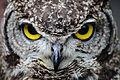 Owls @ Dragonheart, Enschede (9549651052).jpg