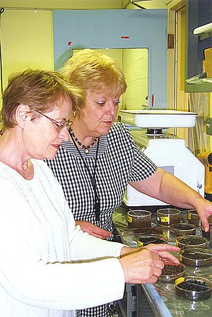 Geomicrobiology - Two scientists prepare samples of soil mixed with oil to test a microbe's ability to clean up contaminated soil.