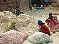 Packing Wheat - Outside Lumbini - Terai - Nepal (13846057544).jpg