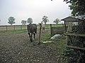 Paddock and stable near Goadby Marwood - geograph.org.uk - 67001.jpg