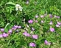 Parcours botanique Le Gua, Alpe d'Huez abc6.jpg