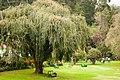 Park Bench Ooty Botanical Garden (125298855).jpeg