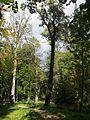 Park dworski (obecnie park miejski im. Rodu Łaskich) - 12 20120928168.jpg