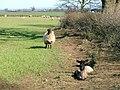 Pasture, Lea Close - geograph.org.uk - 151448.jpg