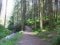 Path, Gortin Glen Forest Park - geograph.org.uk - 1350781.jpg