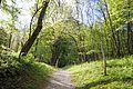 Path in Bovec 3.jpg