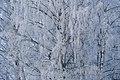 PermaLiv Byvegen-Overnvegen-vinter-trær 29-01-21 7.jpg