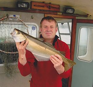 Peter van der Sluijs with a large pollack caught on a rod in Ireland.jpg
