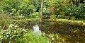 Petit marais - panoramio (1).jpg
