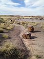 Petrified Forest (31589953345).jpg