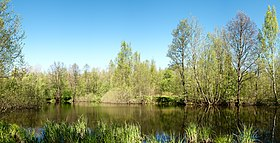 Petrovsky Pond - Panoramic.jpg