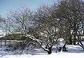 Picnic Area on Llyn Tegid near Llanycil - geograph.org.uk - 607864.jpg