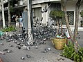 Pigeons Attack.jpg