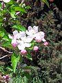 PikiWiki Israel 43185 Plants of Israel.jpg