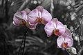Pinecrest Gardens Flowers.jpg