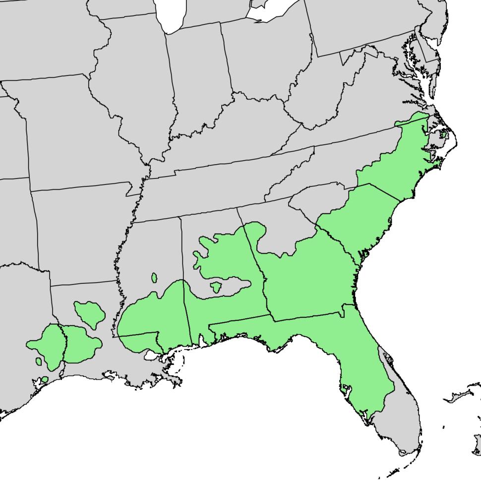 Pinus palustris range map