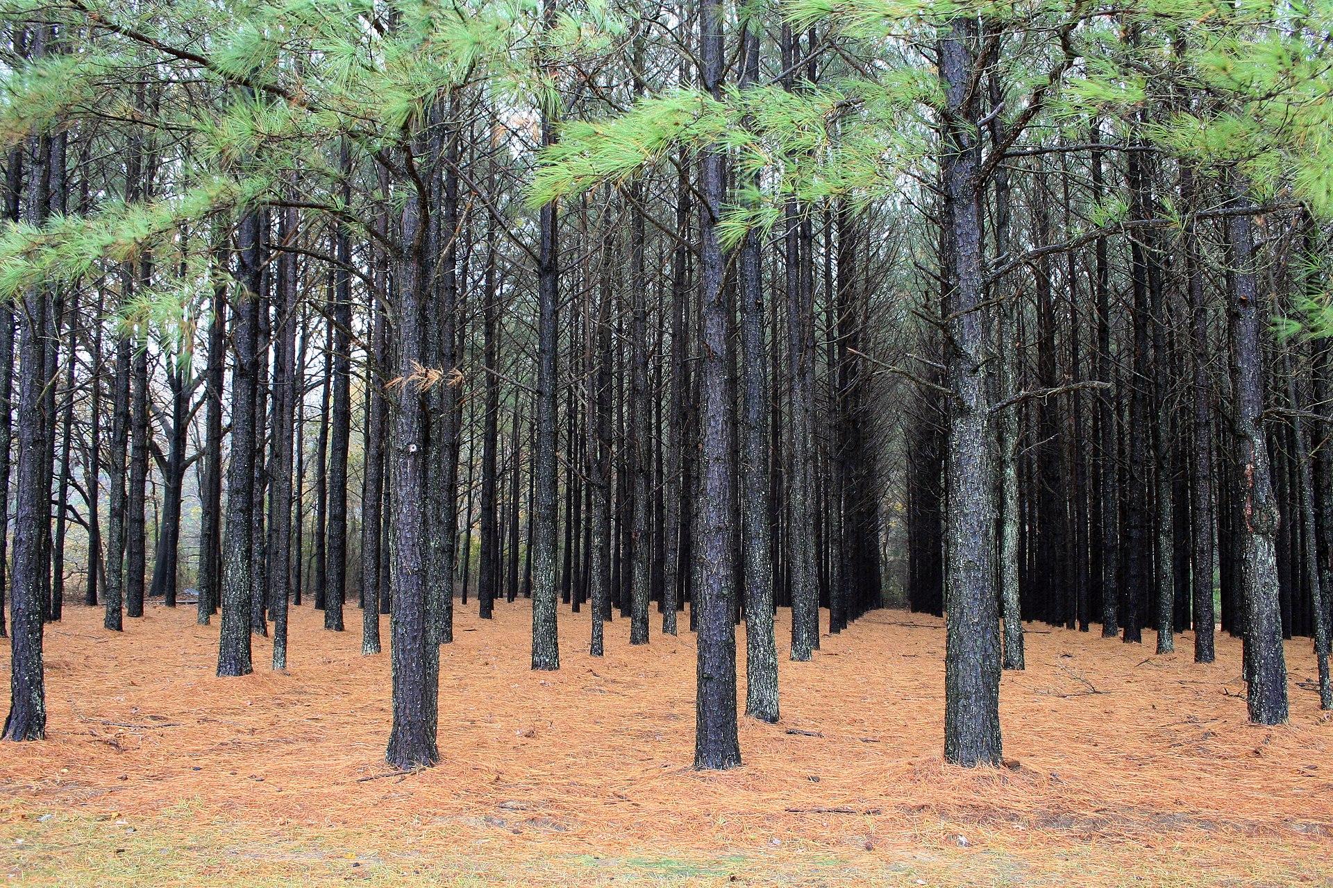 Plantation Wikipedia