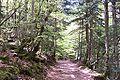 Pirineo Ordesa 1.jpg