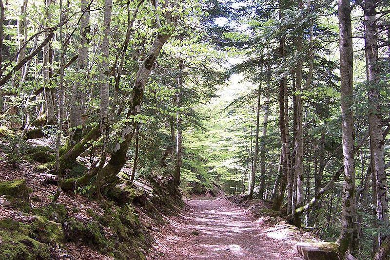Parque Nacional de Ordesa y Monte Perdido 800px-Pirineo_Ordesa_1