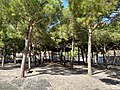 Plaça de la Palmera de Sant Martí 13.jpg