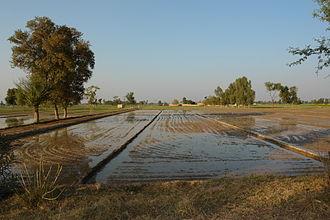 SahysMod - Irrigated land