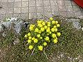 Plant.2741.JPG