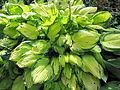 Plante verte et jaune.jpg