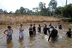 Playing with elephants in their sanctuary DVIDS110966.jpg