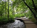 Plitvice Lakes- National Park 3.jpg
