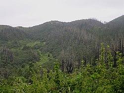 """Après un incendie, l'écosystème forestier a une certaine capacité à """"cicatriser"""" et à se reconstituer. Cette capacité de résilience écologique varie selon le contexte biogéographique et historique."""