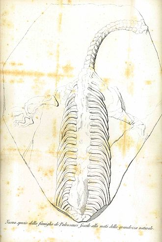 """Palaeosaurus - The earliest drawing captioned Palaeosaurus (incorrectly captioned as Paleosaurus)- although this now lost fossil was probably not a Palaeosaurus (drawn in 1839 by Carlo Cattaneo for the first issue of """"Il Politecnico"""")"""